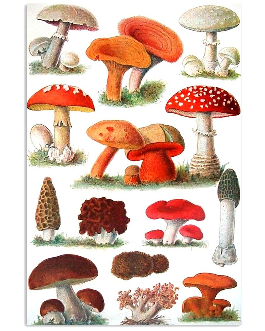 HD Type Of Mushroom 3 11x17 Poster showcase