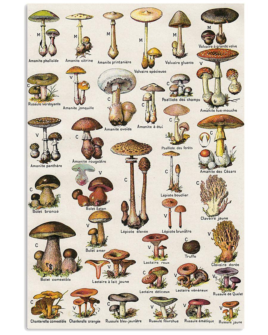 HD Type Of Mushroom 1 11x17 Poster showcase