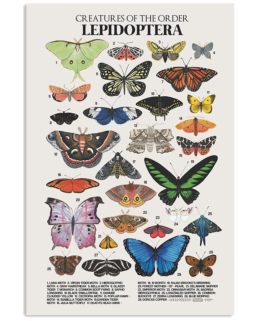HD Lepidoptera Poster 11x17 Poster