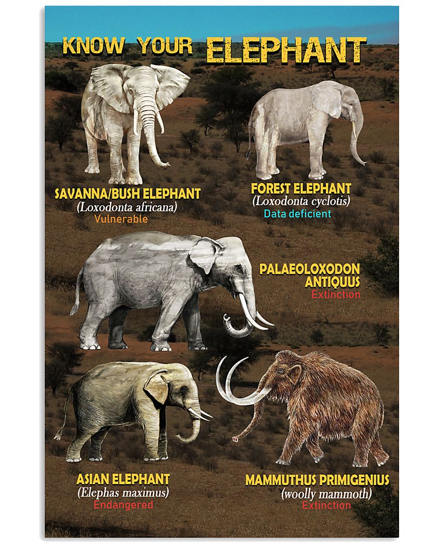 HD Know Your Elephant Poster 11x17 Poster