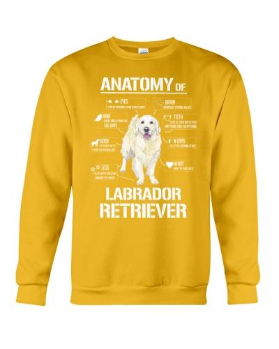 Dog Lovers Lab HD Anatomy