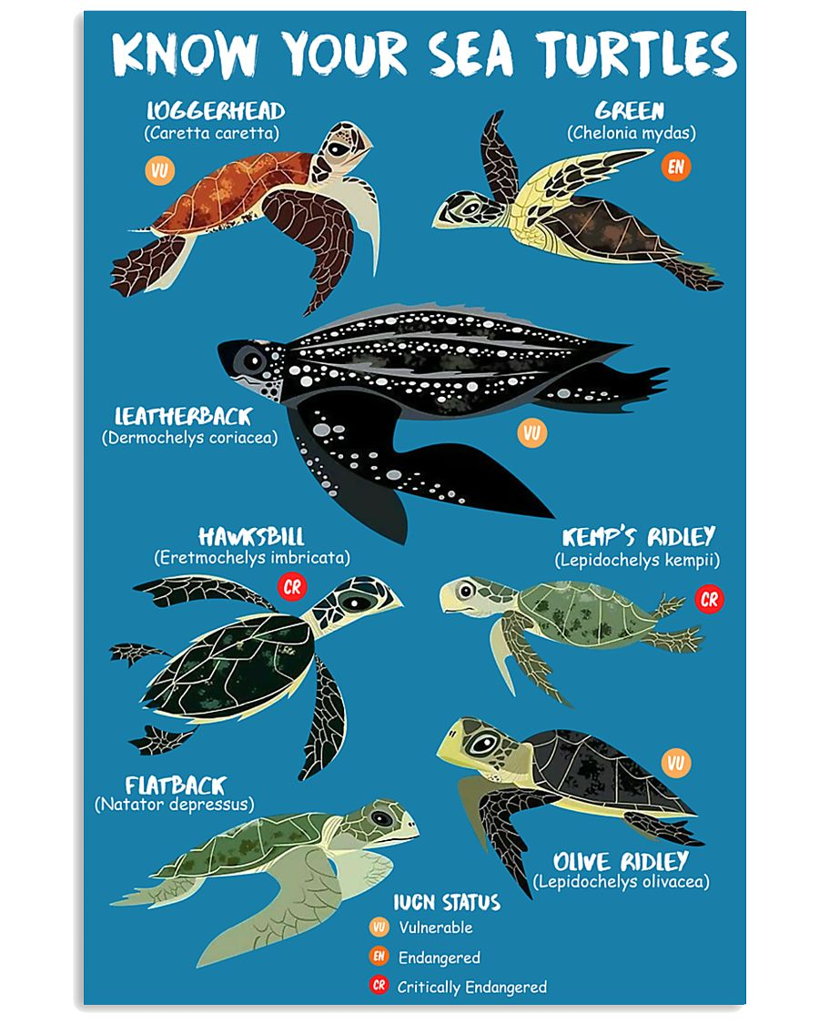 HD Know Your Sea Turtles Poster 11x17 Poster