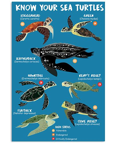 HD Know Your Sea Turtles Poster
