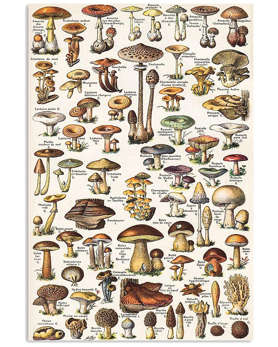 HD Mushroom Poster 11x17 Poster showcase