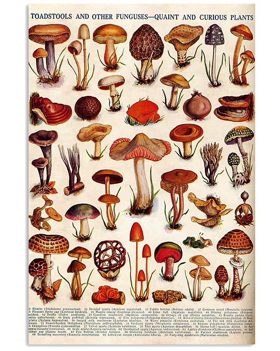 HD Toadstools 11x17 Poster