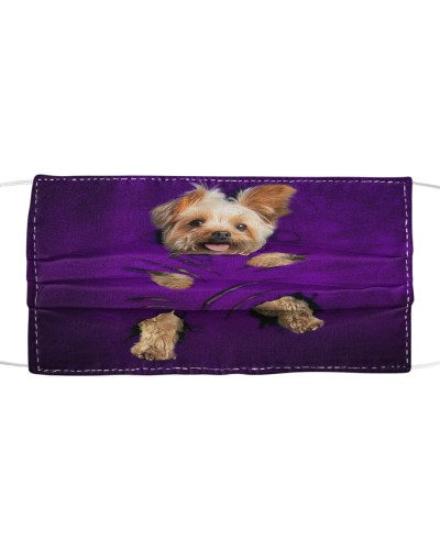 SHN 7 Purple scratches of claws Yorkshire Terrier