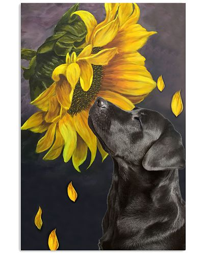 Black Labrador retriever sunflower poster