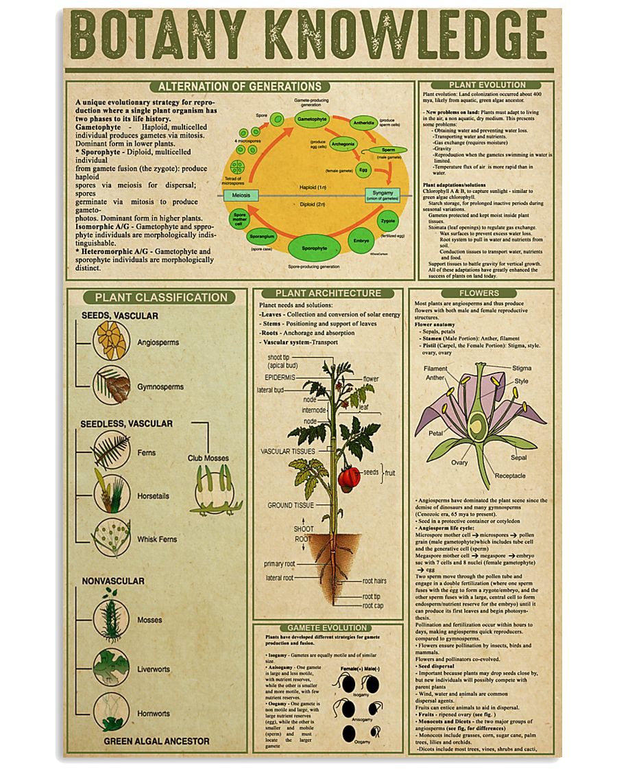 BOTANY KNOWLEDGE 24x36 Poster