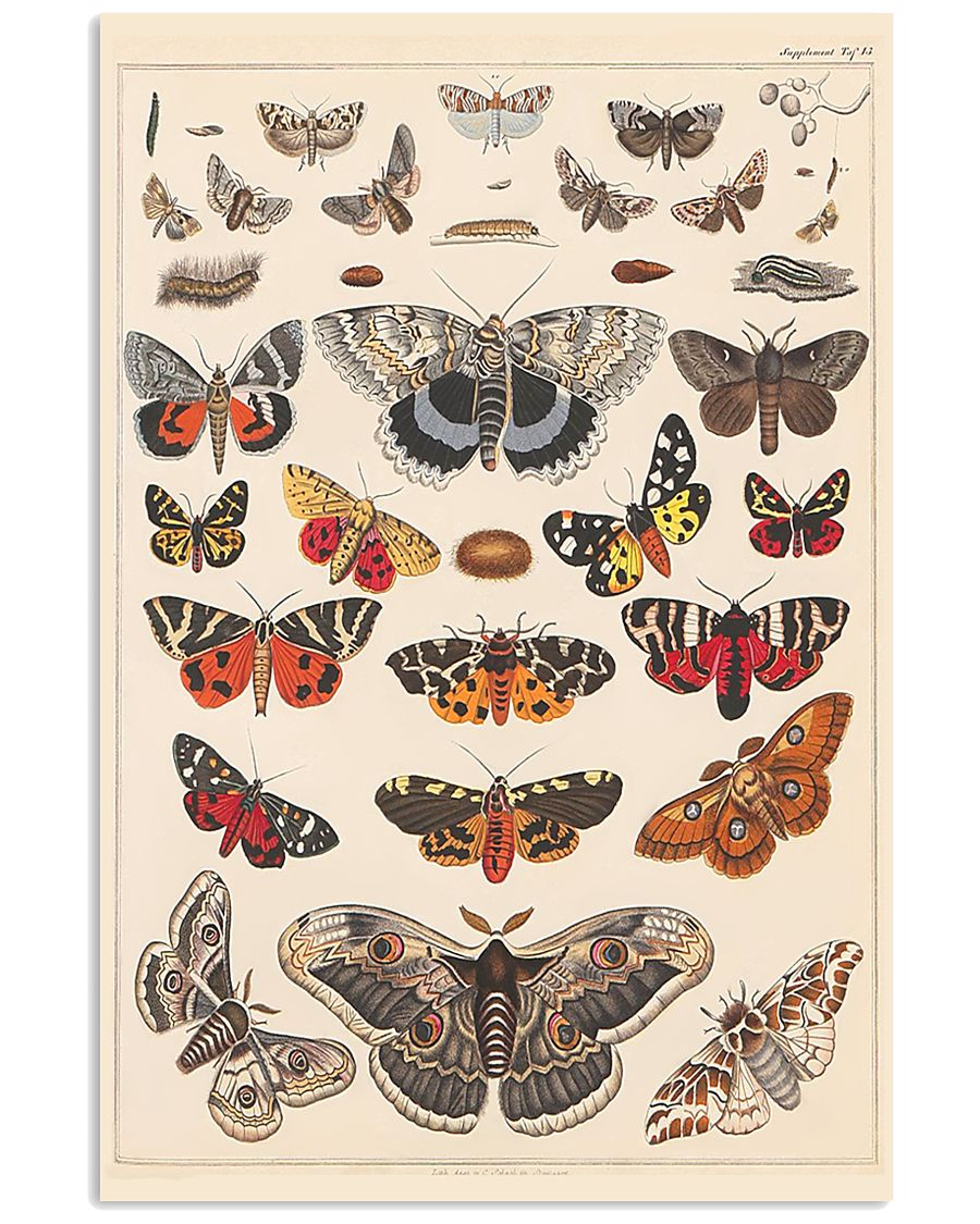 Butterfly  24x36 Poster