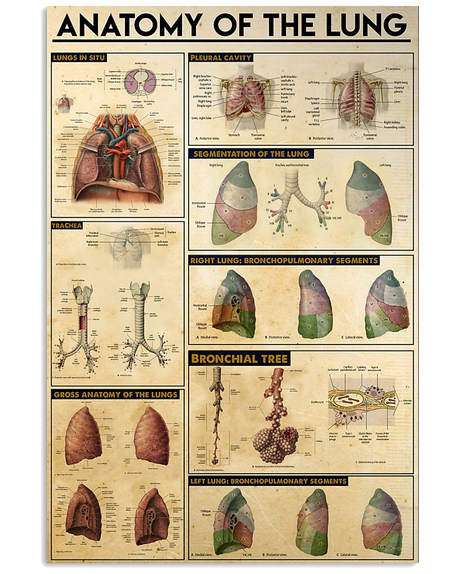 THE LUNG 11x17 Poster
