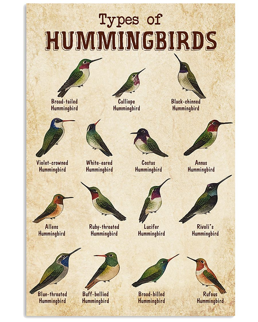 Hummingbird Knowledge 11x17 Poster