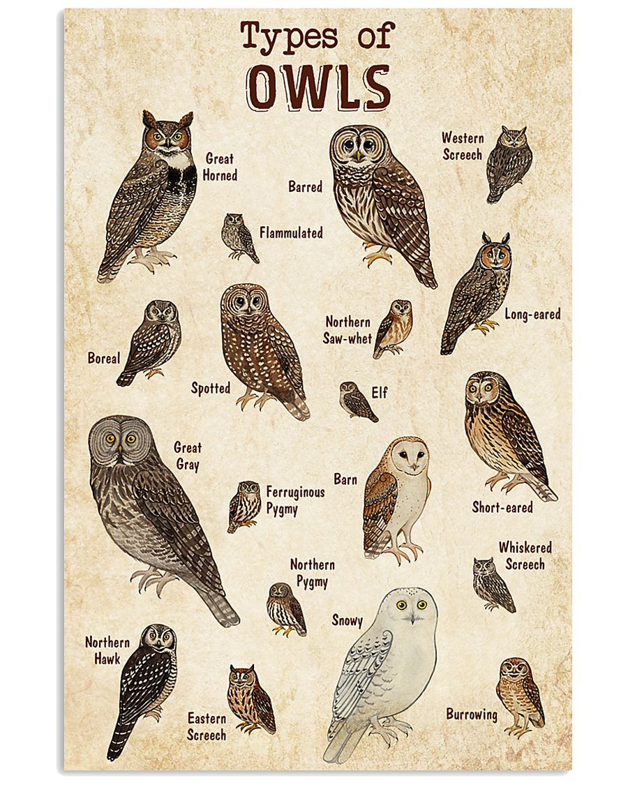 Owl Knowledge 11x17 Poster