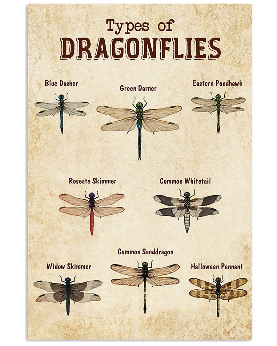 Dragonfly Knowledge 11x17 Poster