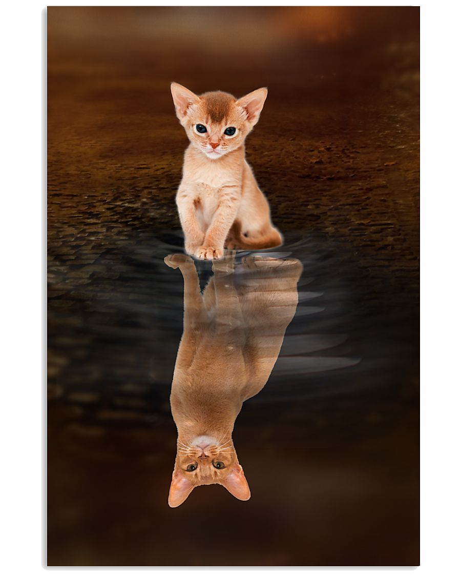 Abyssinian Cat Reflection Poster 1112 11x17 Poster