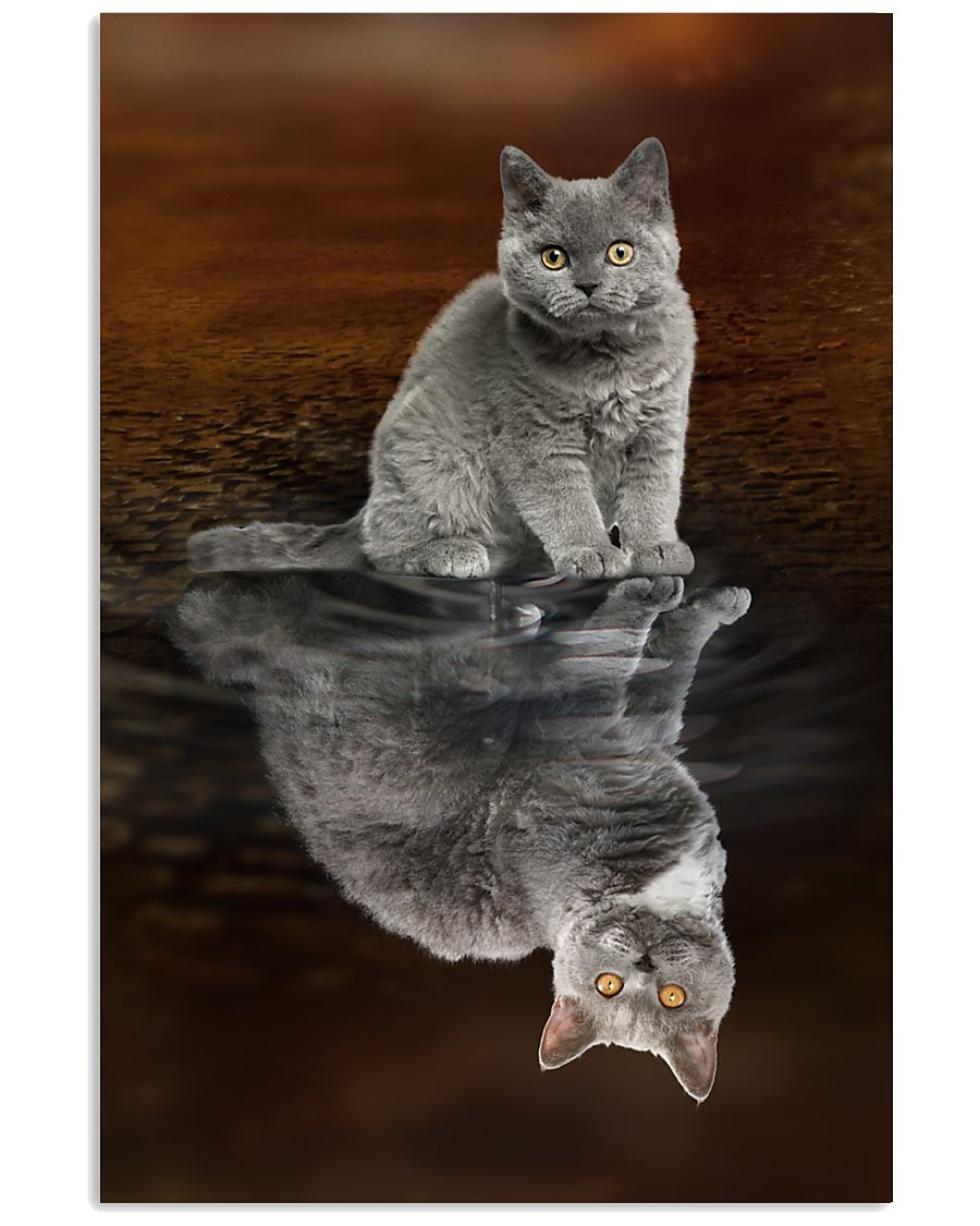 Selkirk Rex Cat Reflection Poster 1112  11x17 Poster