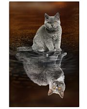Selkirk Rex Cat Reflection Poster 1112  11x17 Poster front
