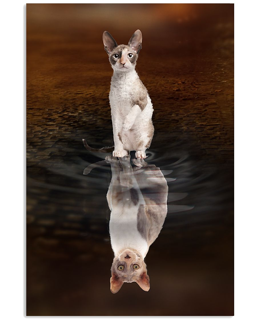 Cornish Rex Cat Reflection Poster 1112 11x17 Poster