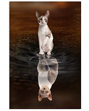 Cornish Rex Cat Reflection Poster 1112 11x17 Poster front