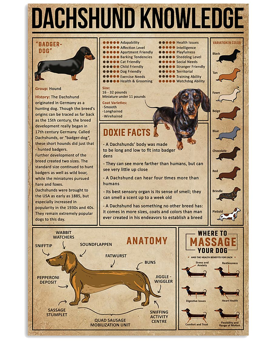 Knowledge Dachshund Wiener Dog 16x24 Poster