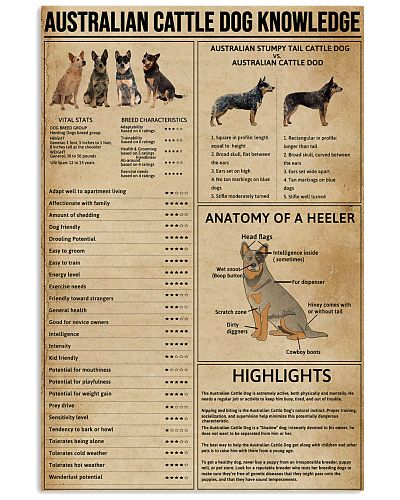 Australian Cattle Dog Knowledge
