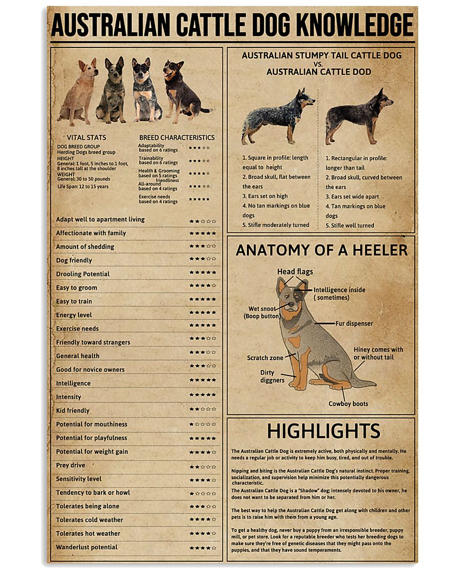 Australian Cattle Dog Knowledge 11x17 Poster
