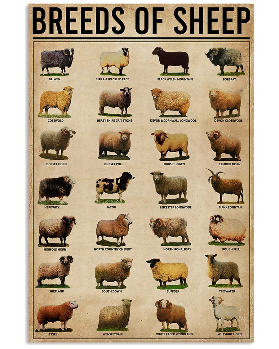 Breeds Of Sheep Farm 11x17 Poster