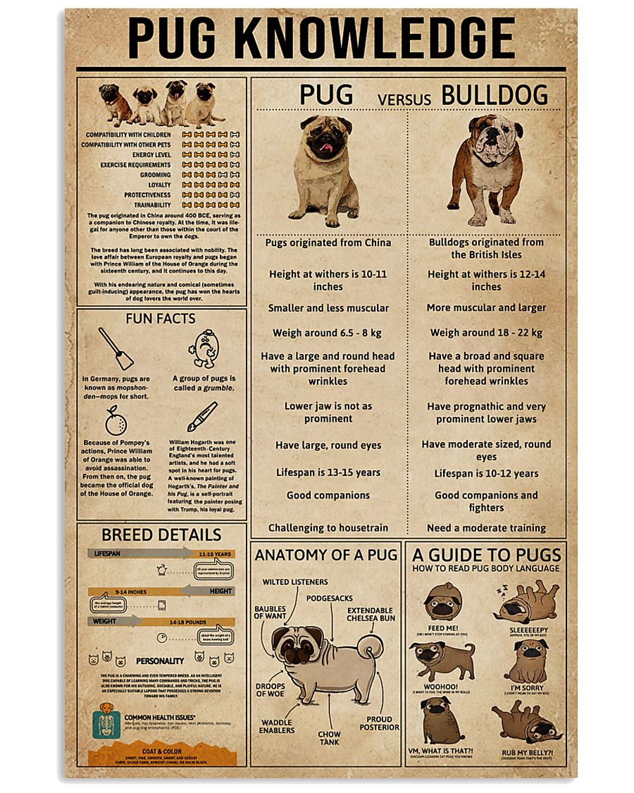 Knowledge Pug 11x17 Poster
