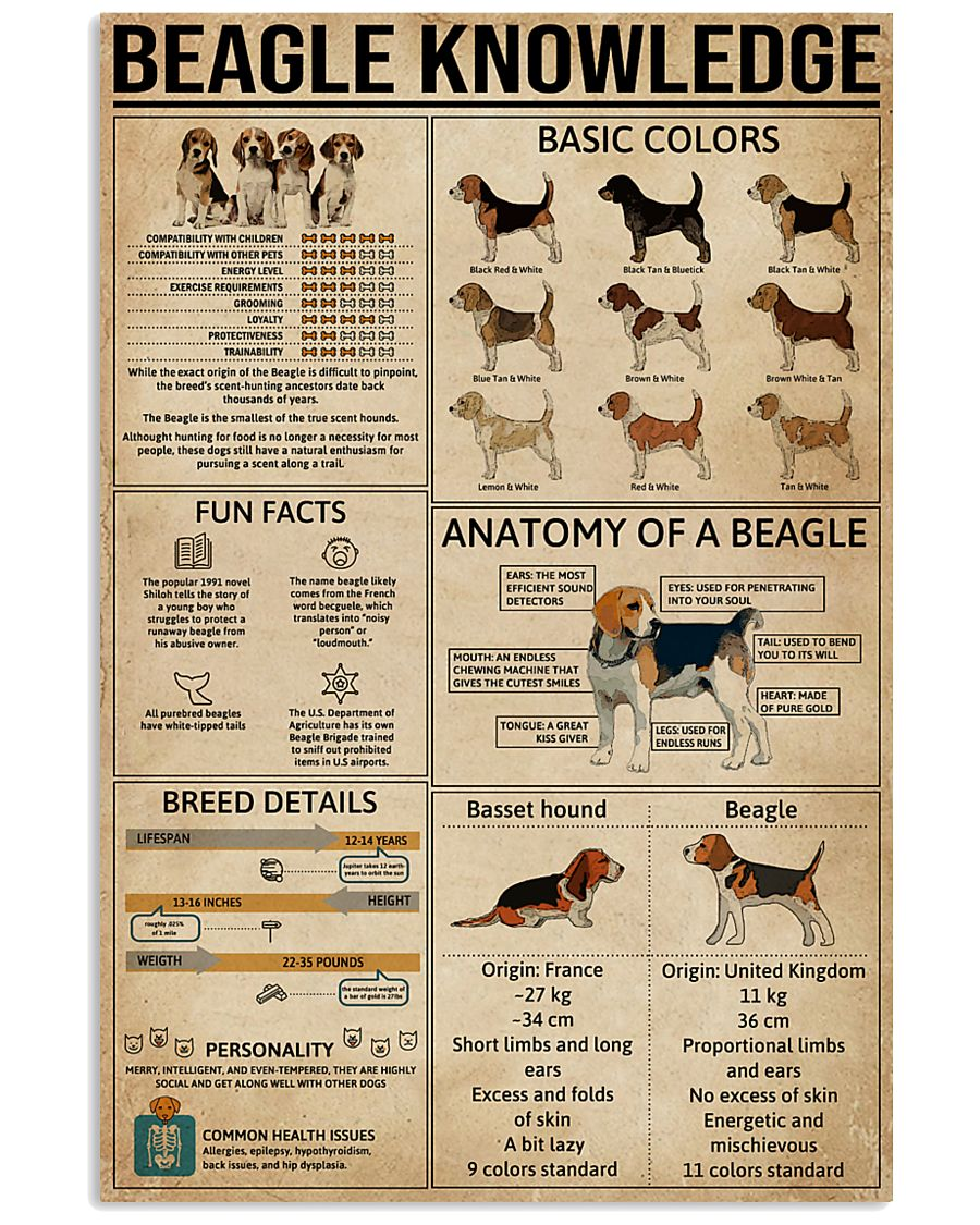 Knowledge Poster Beagle 16x24 Poster
