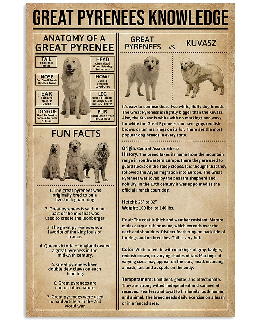 Great Pyrenees Knowledge Dog 11x17 Poster