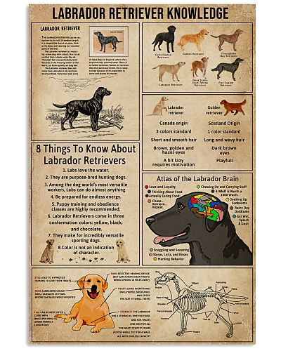 Labrador Retriever Knowledge