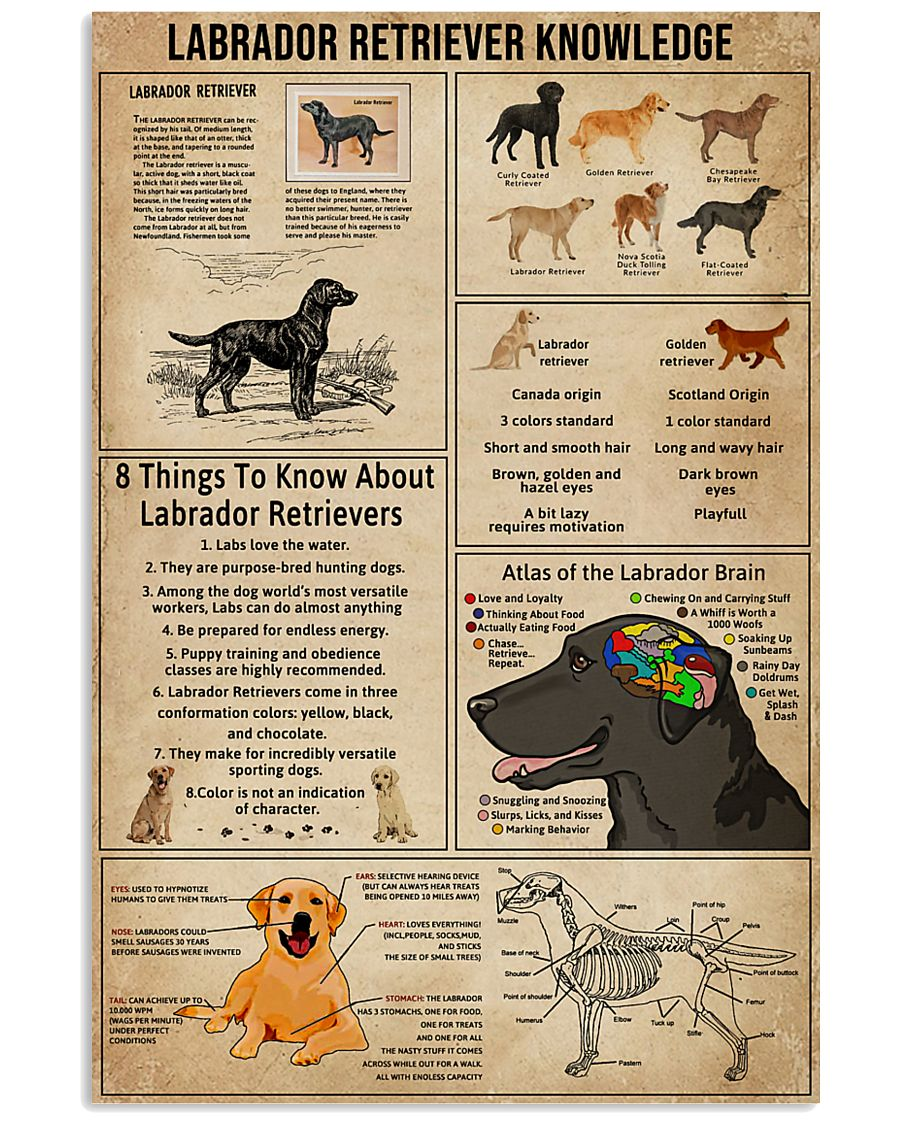 Labrador Retriever Knowledge 11x17 Poster