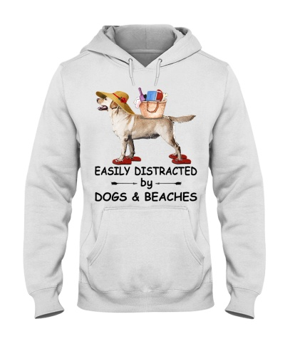 Easily Distracted Beach Labrador Retriever