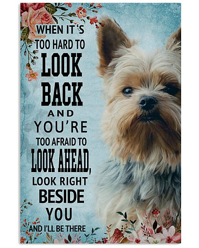 Classic Blue Yorkshire Terrier Look Right Beside