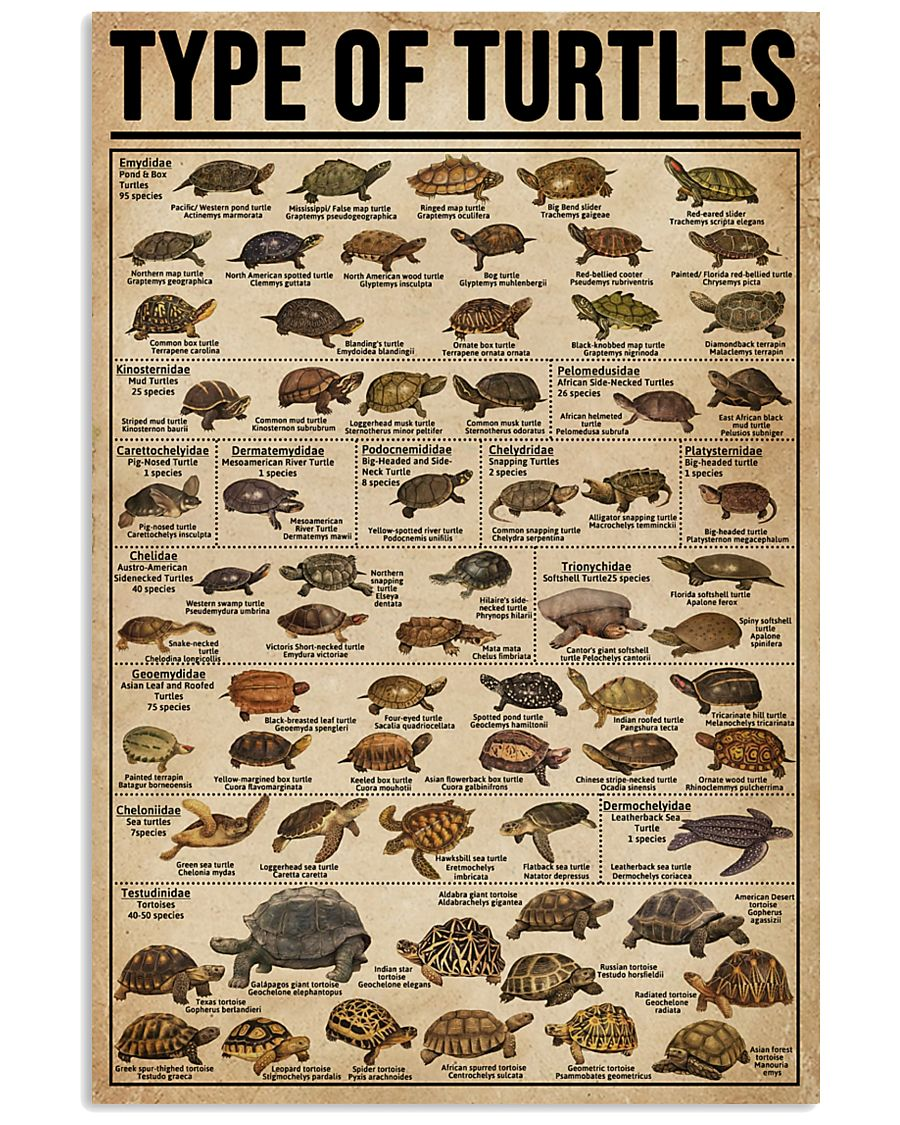 Type Of Turtles 16x24 Poster