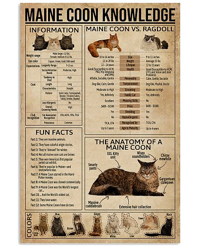 Maine Coon Knowledge Cat