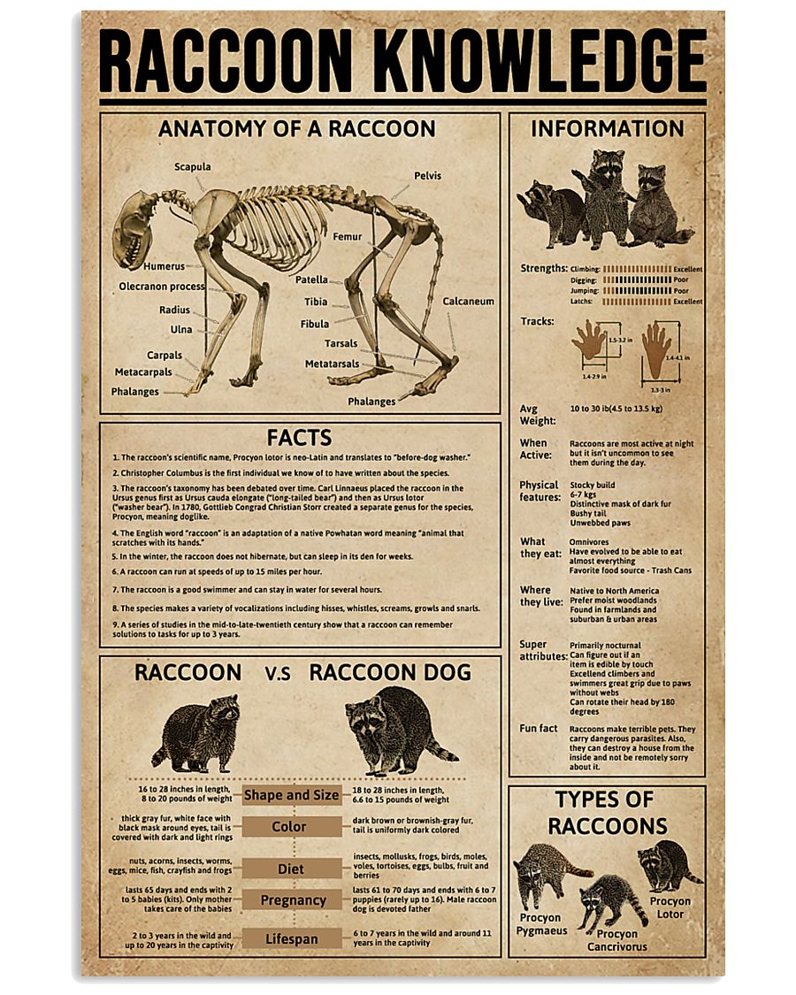 Raccoon Knowledge 11x17 Poster