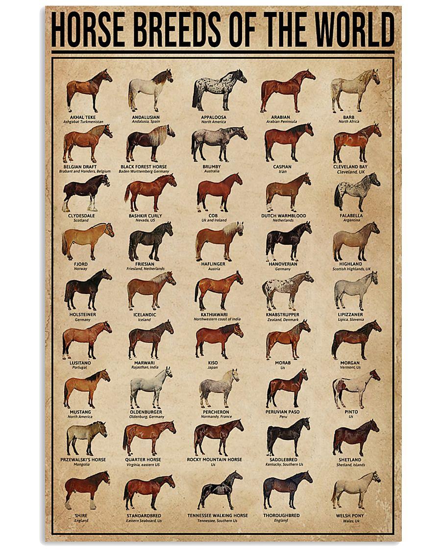 Horse Breeds Of The World 11x17 Poster