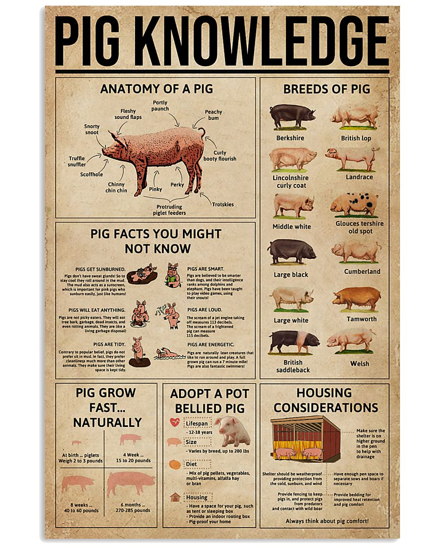 Pig Knowledge Farm 11x17 Poster