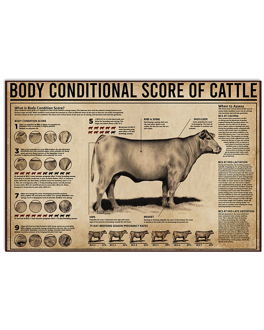 Body Conditional Score Of Cattle 17x11 Poster