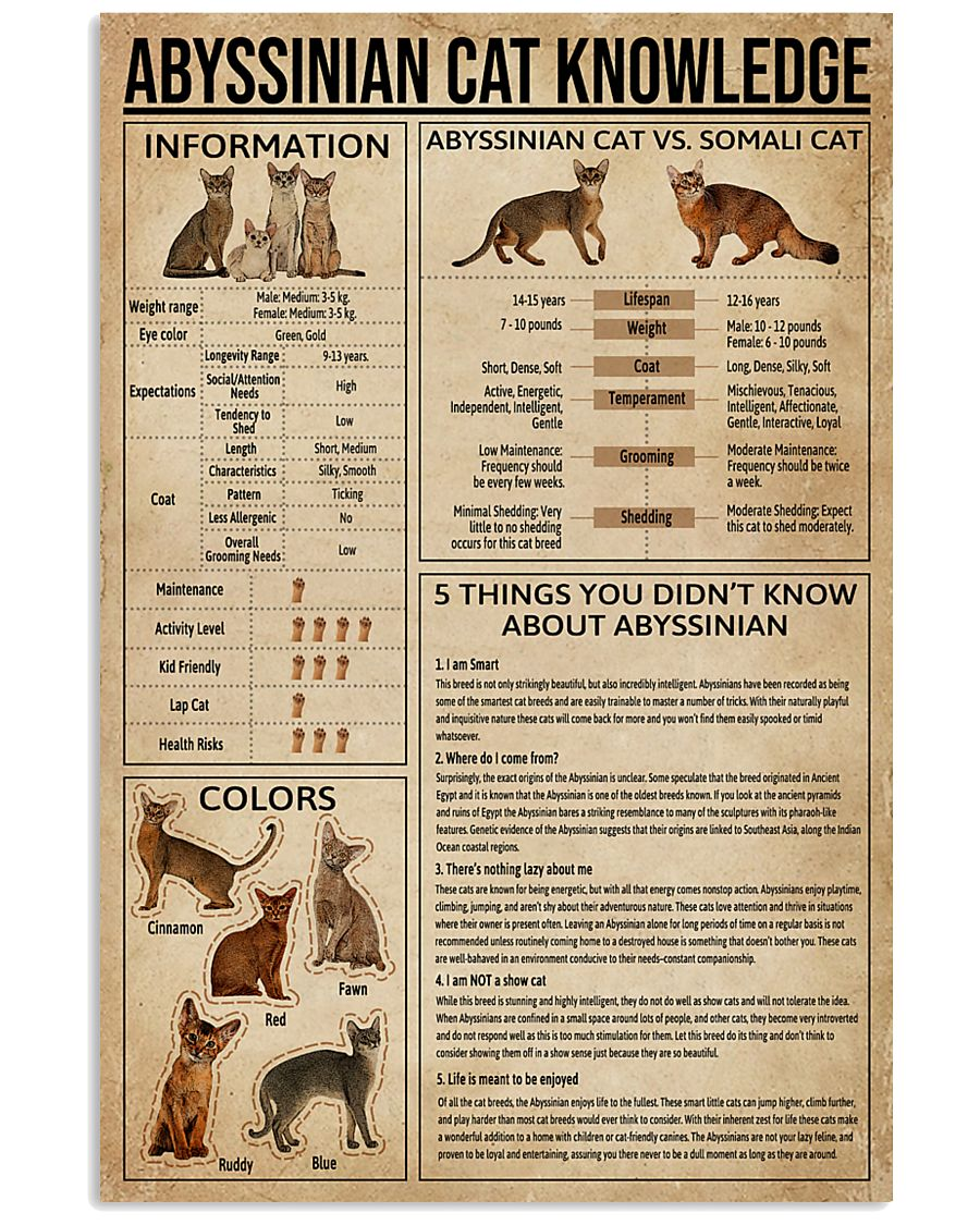 Abyssinian Cat Knowledge 11x17 Poster