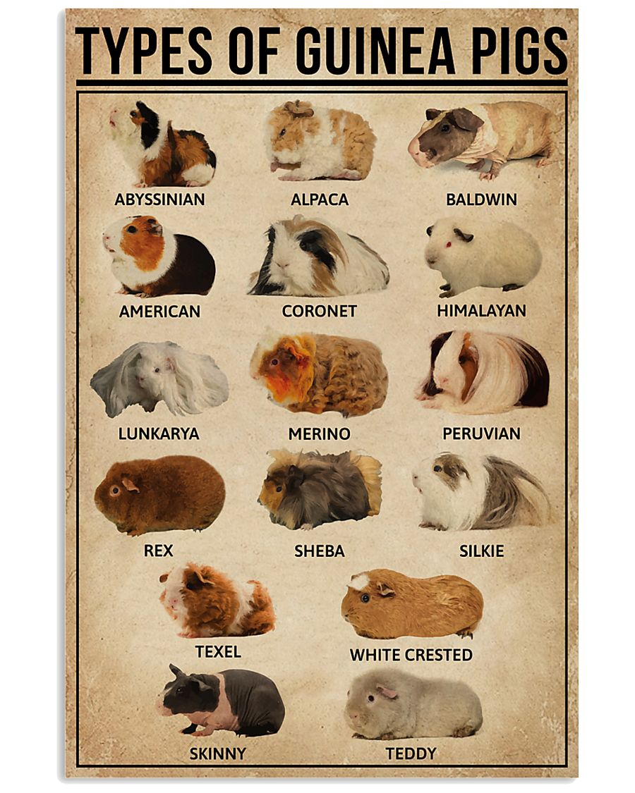 Types Of Guinea Pigs 16x24 Poster