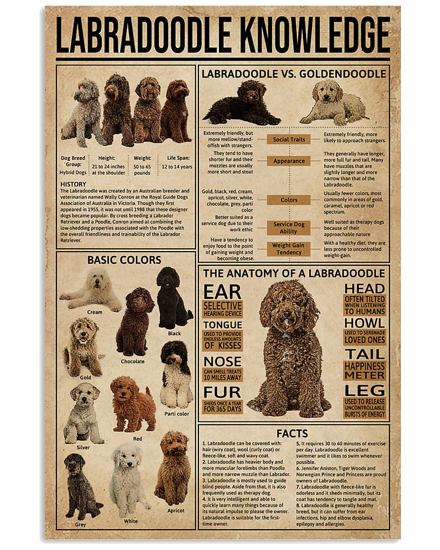 Labradoodle Knowledge 11x17 Poster