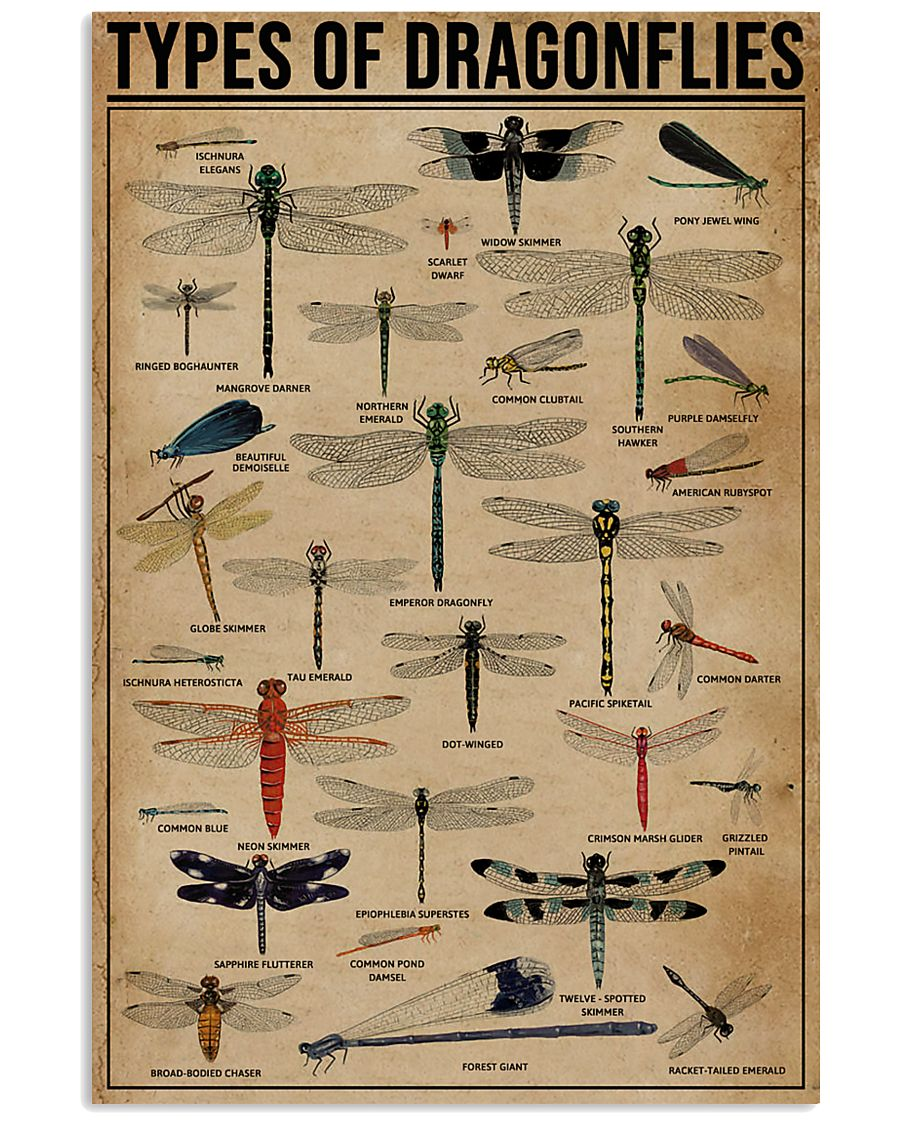 Types Of Dragonflies 11x17 Poster