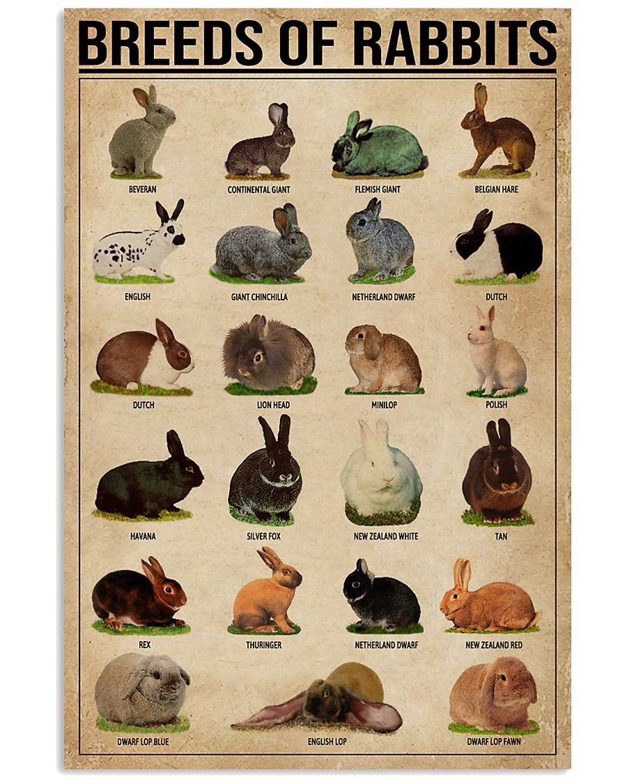 Breeds Of Rabbits 11x17 Poster
