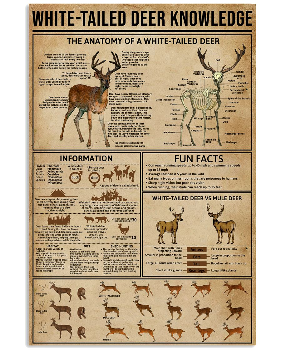 White-Tailed Deer Knowledge 16x24 Poster