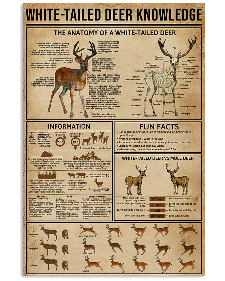 White-Tailed Deer Knowledge 11x17 Poster