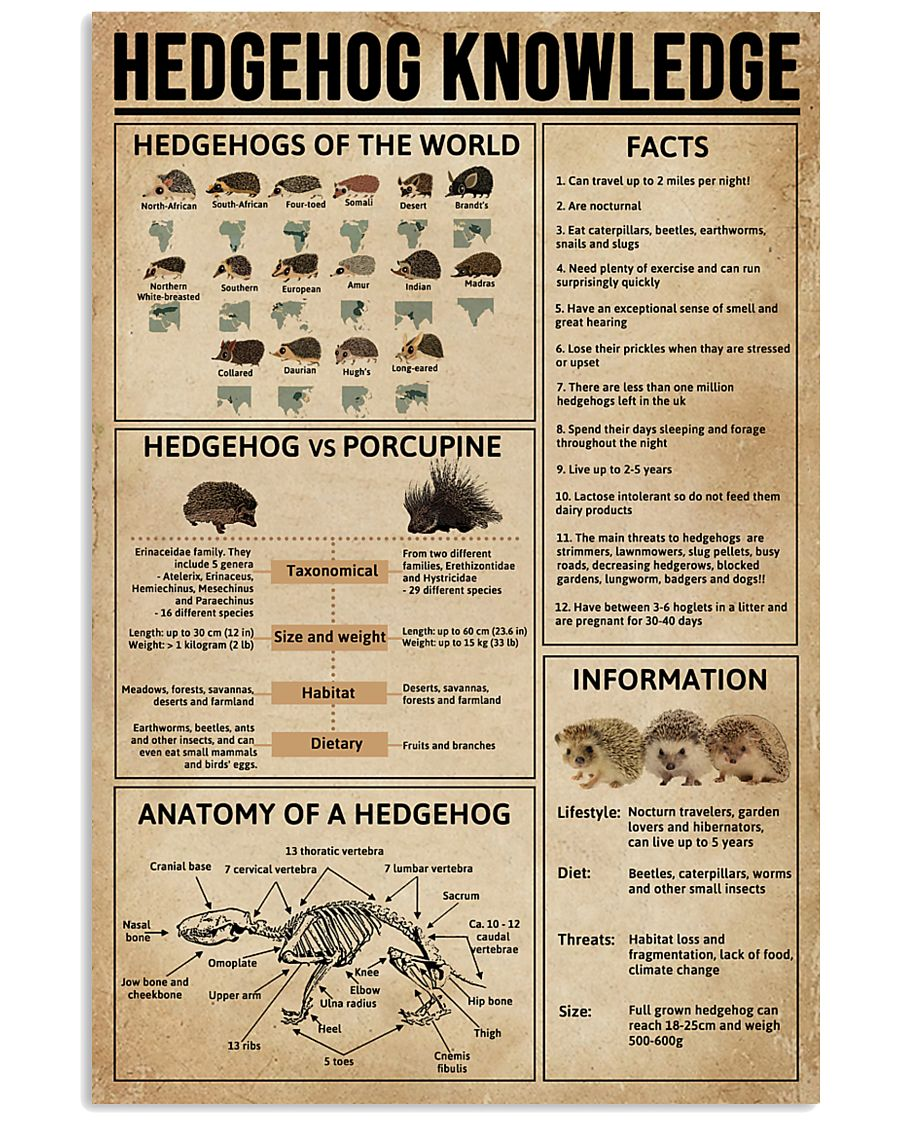 Hedgehog Knowledge 11x17 Poster