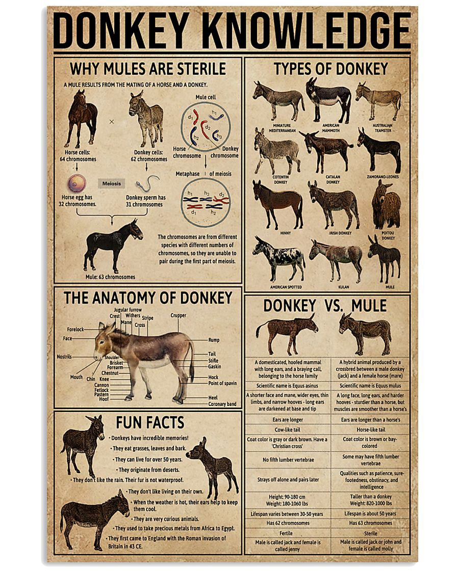 Donkey Knowledge 11x17 Poster