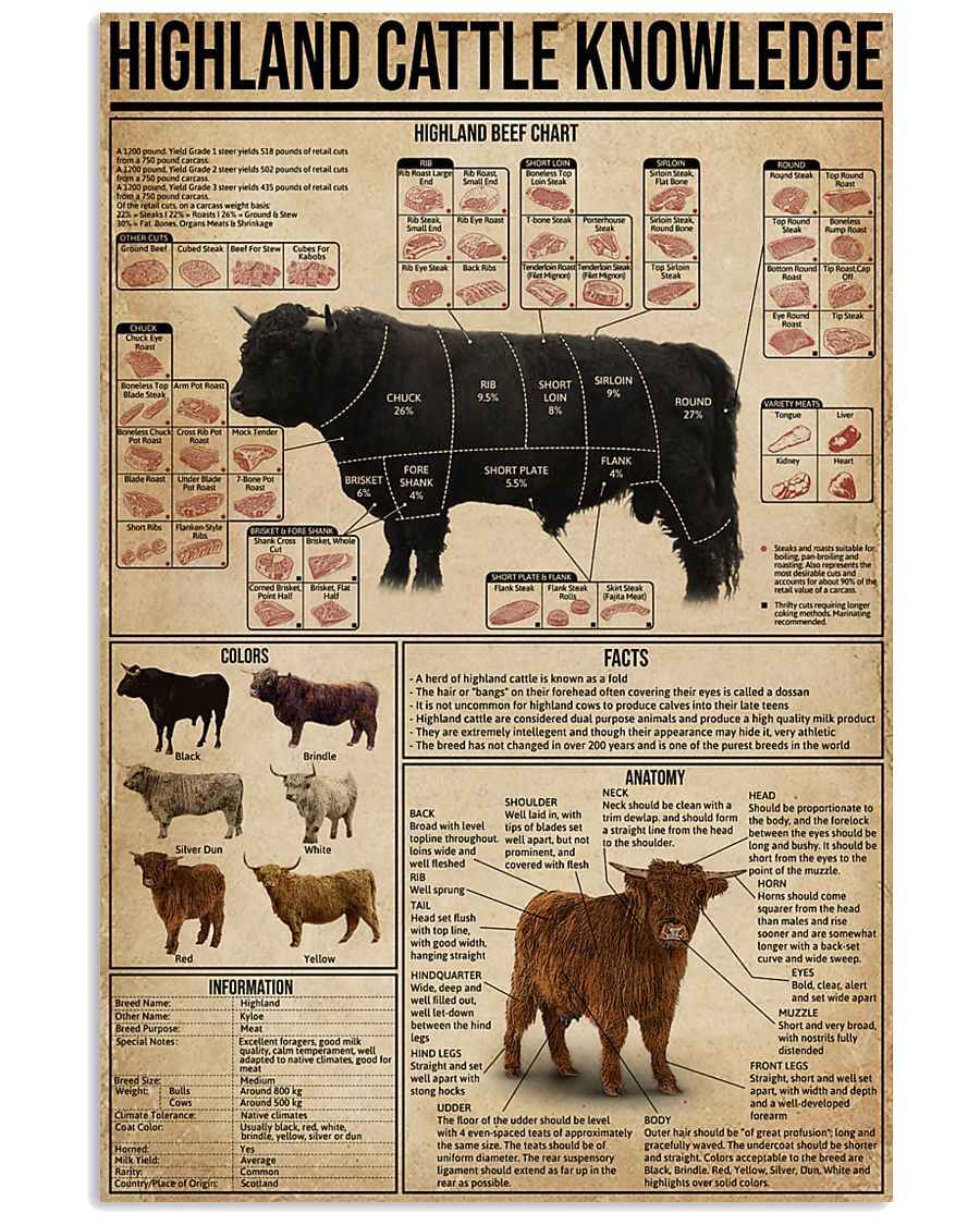 Highland Cattle Knowledge 16x24 Poster