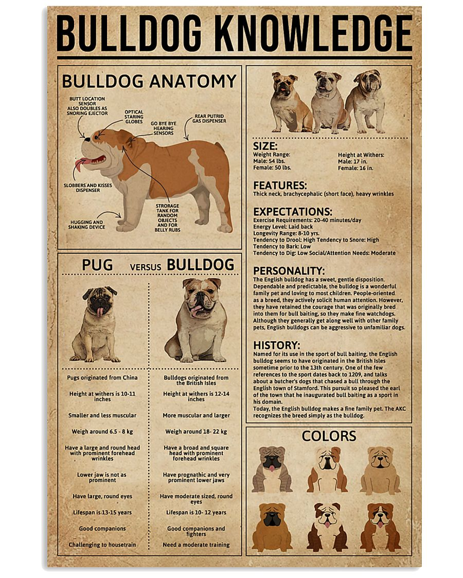 Bulldog Knowledge 11x17 Poster